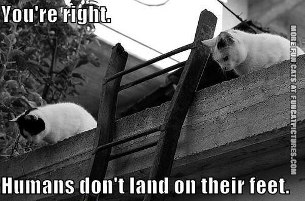 Youre-right.-Humans-dont-land-on-their-feet-2-cats-on-the-roof