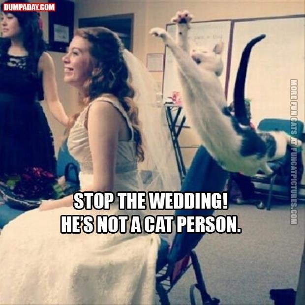 stop wedding not a cat person