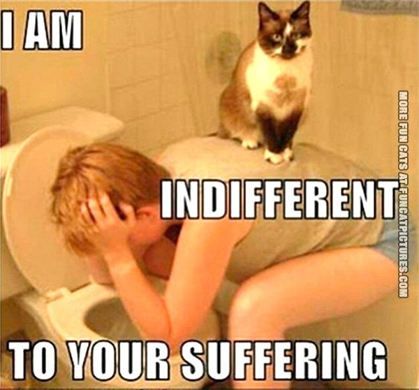 indifferenttoyoursuffering