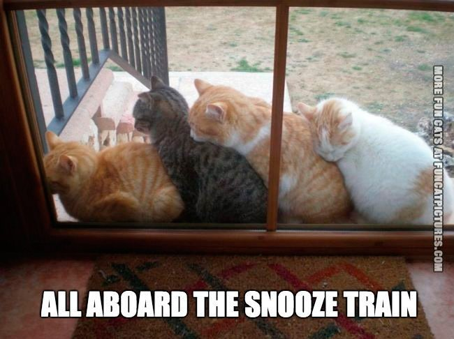 all-aboard-the-snooze-train