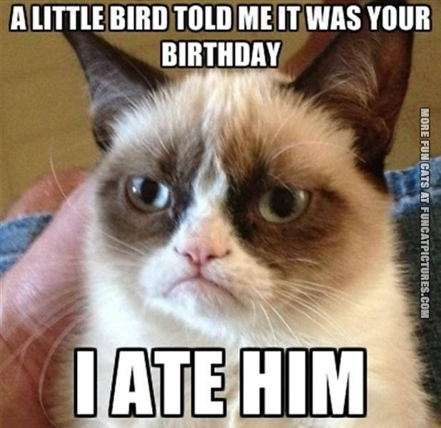 bird told me grumpy cat