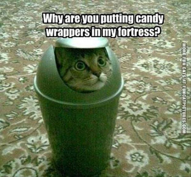 candy wrapper in my castle cat