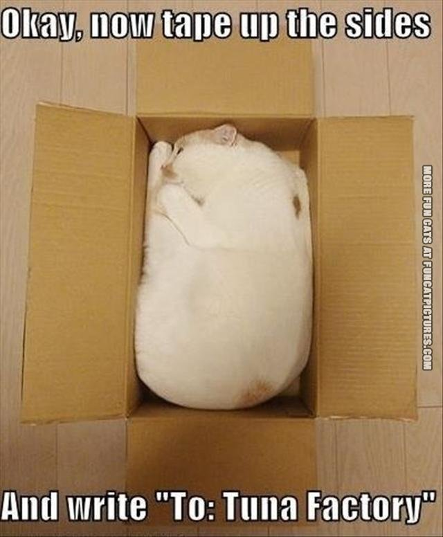 cat in a box to tuna factory