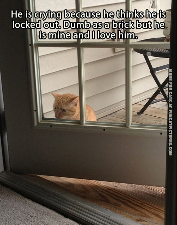 cat locked out