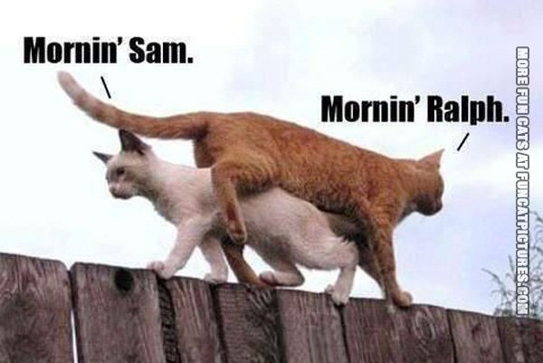 cats-on-their-way-to-work