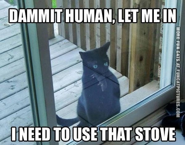 damnit-human-let-me-in-cat