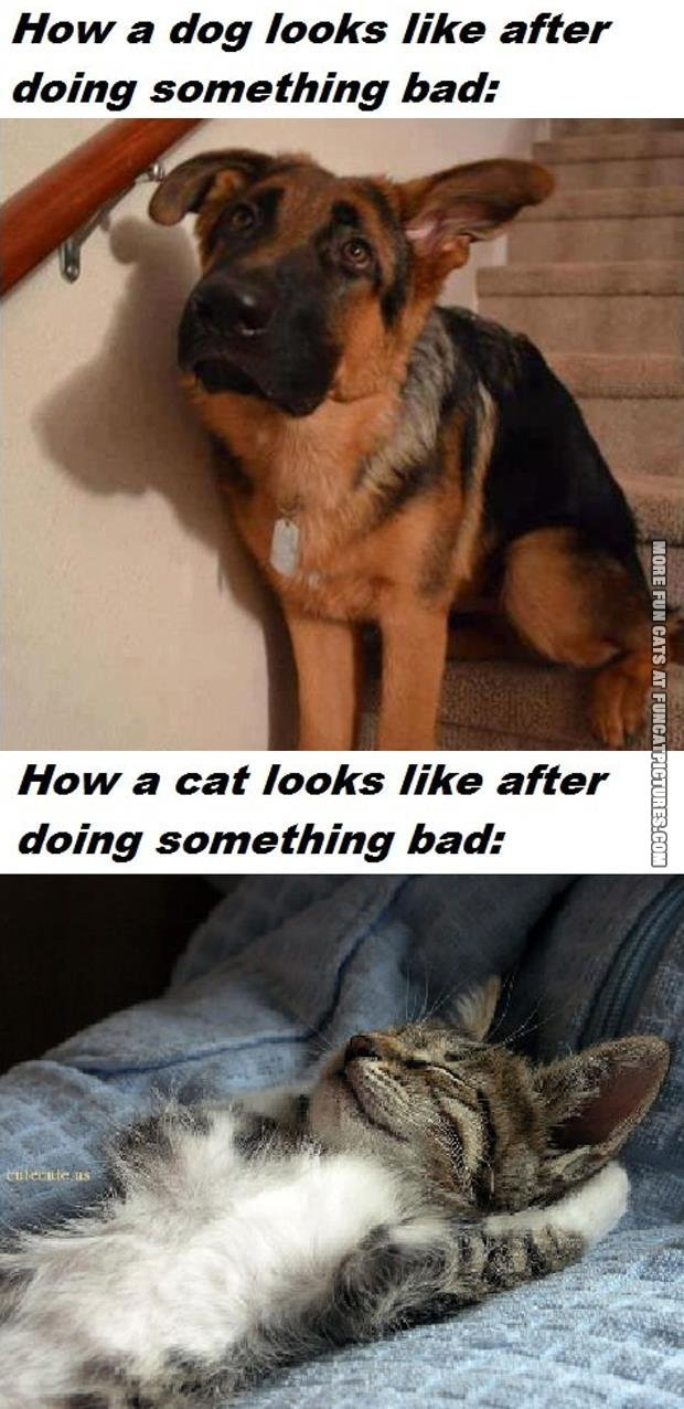 dog vs cat after doing something bad