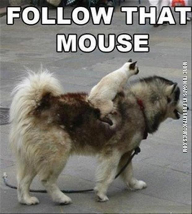 follow-that-mouse
