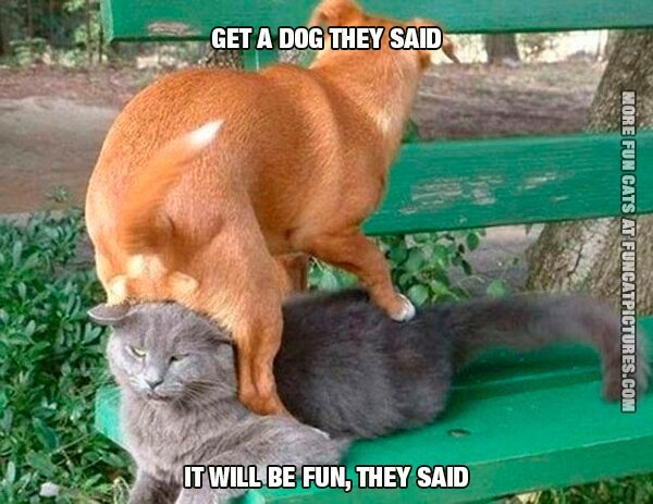 get-a-dog-they-said-it-will-be-fun-they-said-cat