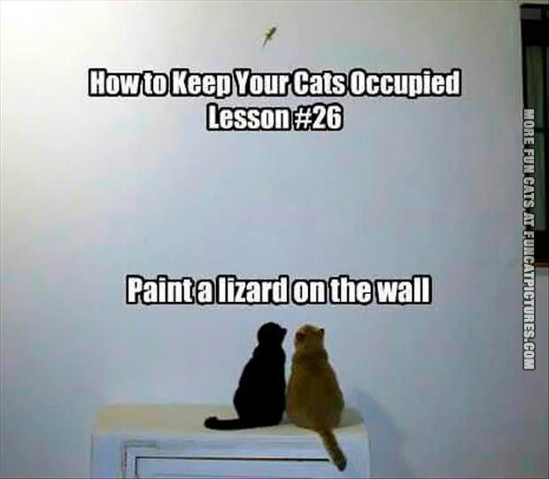 how-to-keep-your-cats-occupied