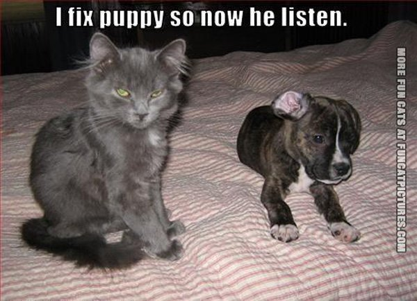 i-fix-puppy-now-hel-listen-cat