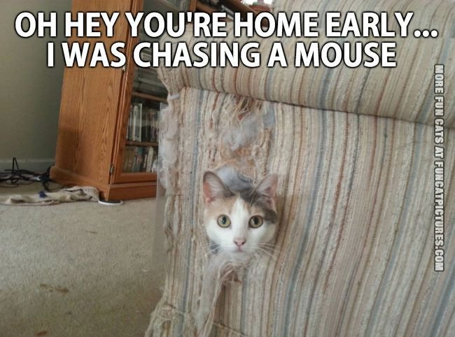 i-was-chasing-a-mouse-cat