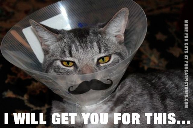 i-will-get-you-for-this-cat-with-moustache