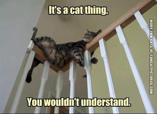 its a cat thing