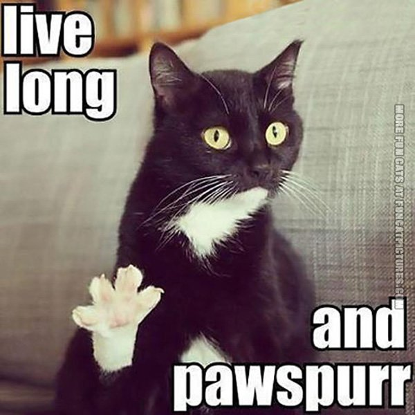 live-long-and-pawspurr-cat