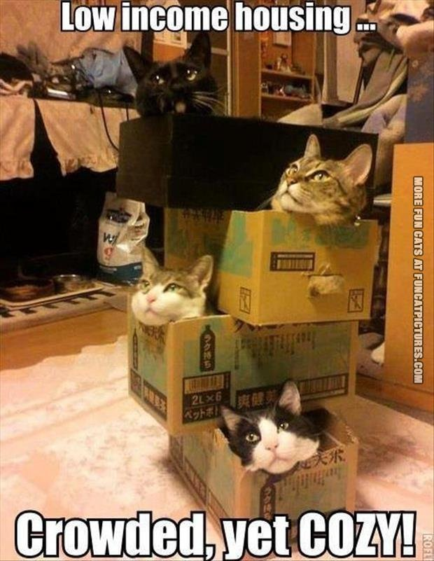 low-income-houshold-cats
