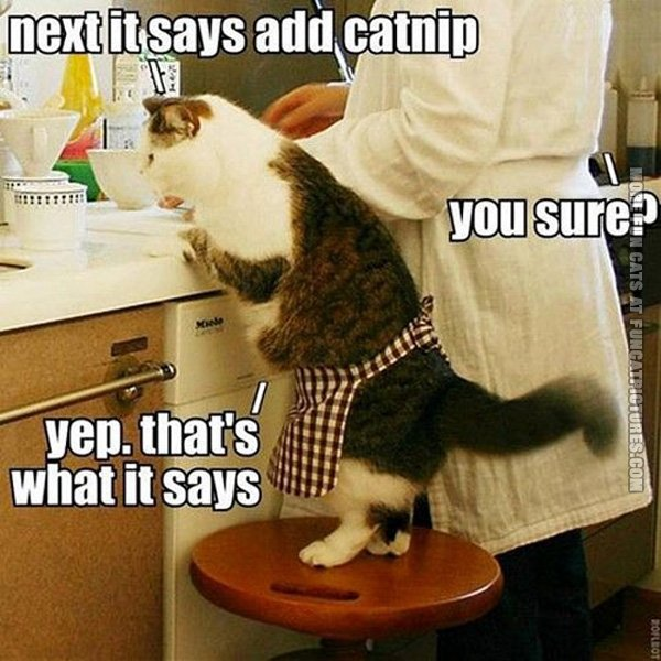 next-it-says-add-catnip-cat