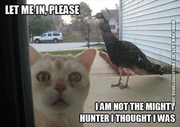 not the mighty hunter cat