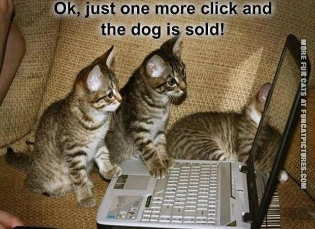 one-more-click-dog-is-sold-cat