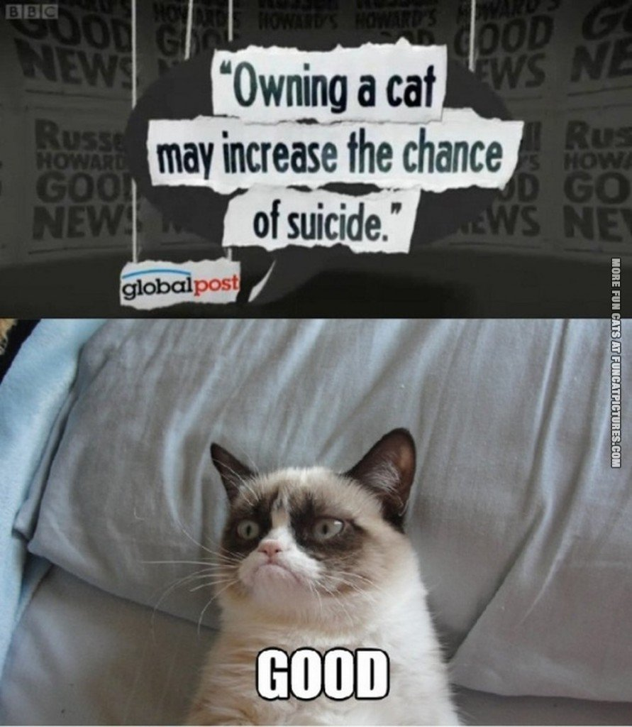 owning a cat may increase the chanse of suicide grumpy