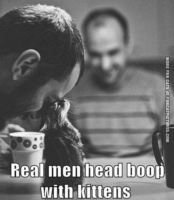 real-men-head-boop-with-kittens