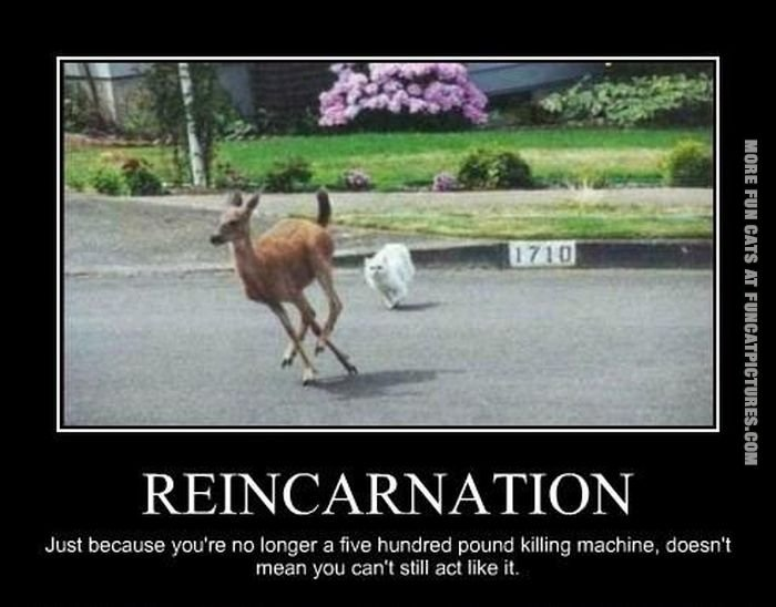 Funny Reincarnation Quotes. QuotesGram