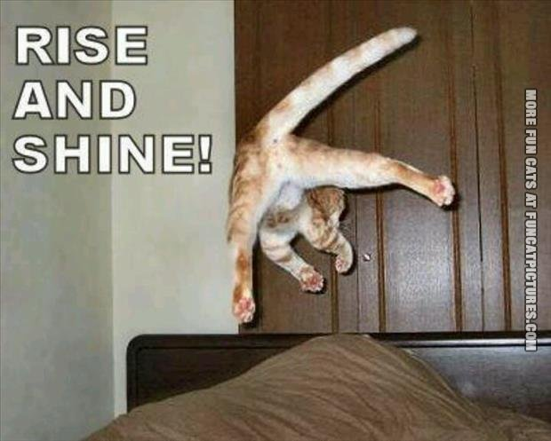 rise and shine cat