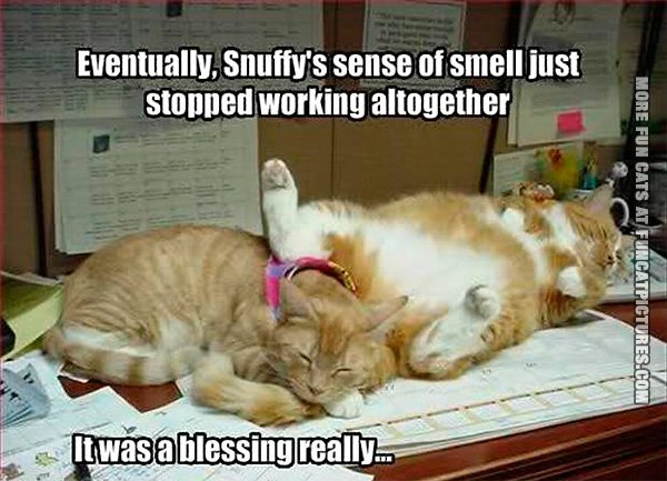 snuffys-sense-of-smell