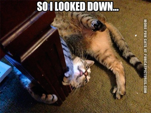 so-i-looked-down-cat