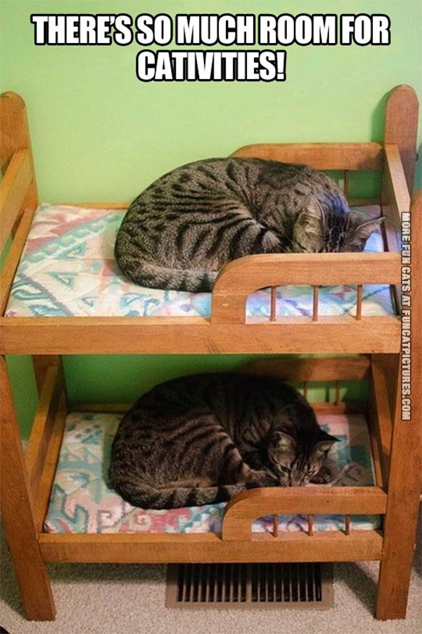 so-much-room-for-cativities-cat