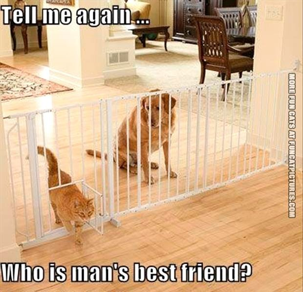 tell-me-again-who-is-mans-best-friend
