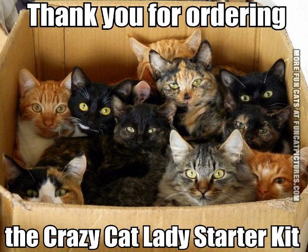 thank you for ordering crazy cat lady starter kit