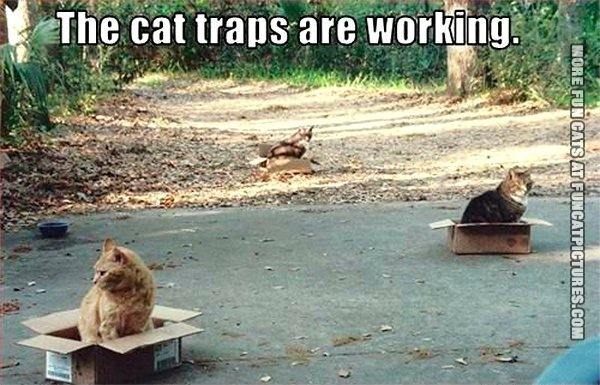 the-cat-traps-are-working