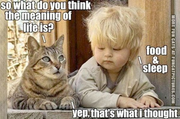 the-meaning-of-life-cat-and-baby