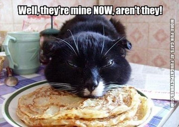 theyre-mine-now-cat-pancakes