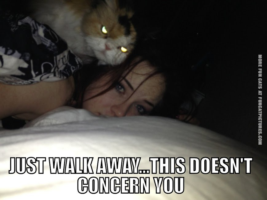 this doesnt concern you cat