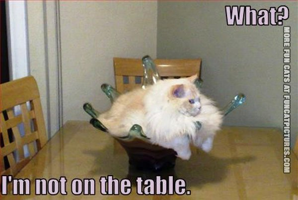 what-im-not-on-the-table-cat