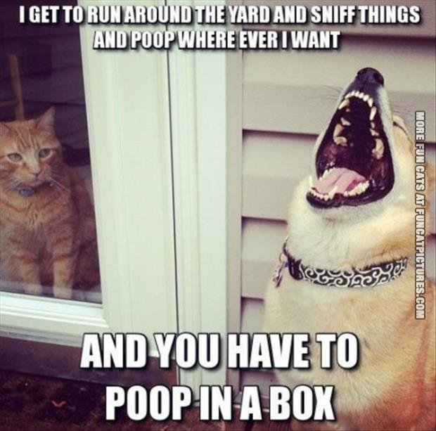 you have to poop in a box dog cat