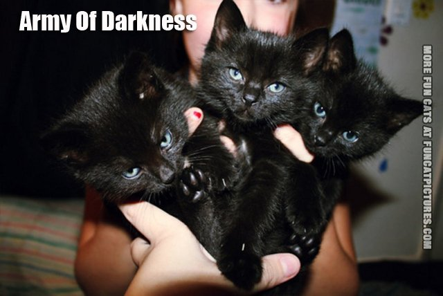 army of darknes cats