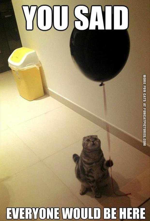 fun cat pictue you said everyone should bee here balloon