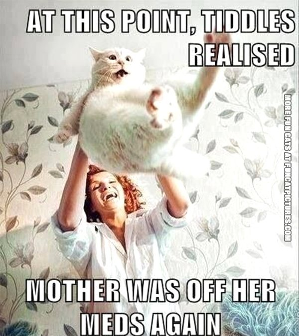 fun cat picture at this point tiddles realized mother was of her meds again