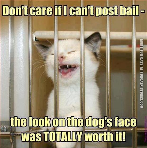 fun cat picture dont care if i cant post bail