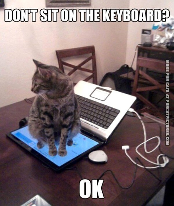 fun cat picture dont sit on the keyboard