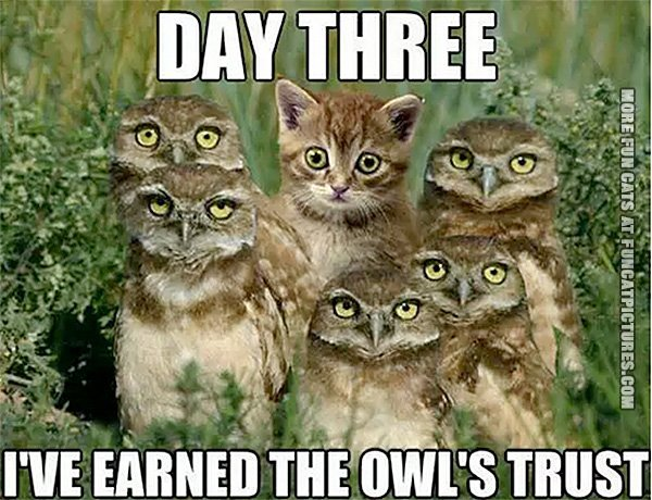 fun-cat-picture-earned-the-owls-trust