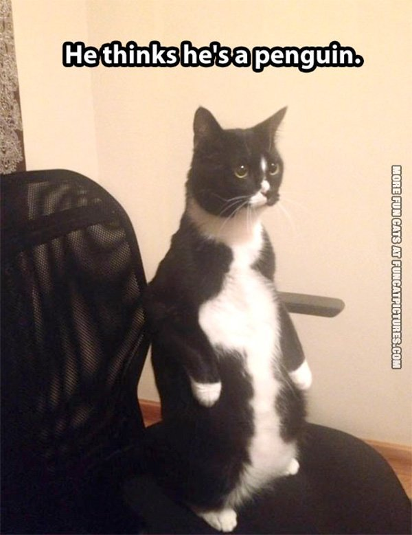 fun-cat-picture-he-thinks-hes-a-penguin