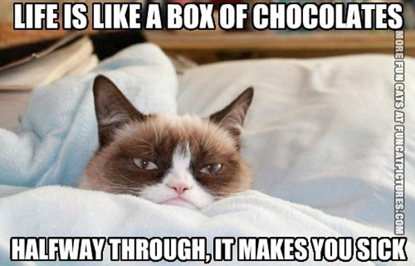 fun-cat-picture-life-is-like-a-box-of-chocolates-grumpy