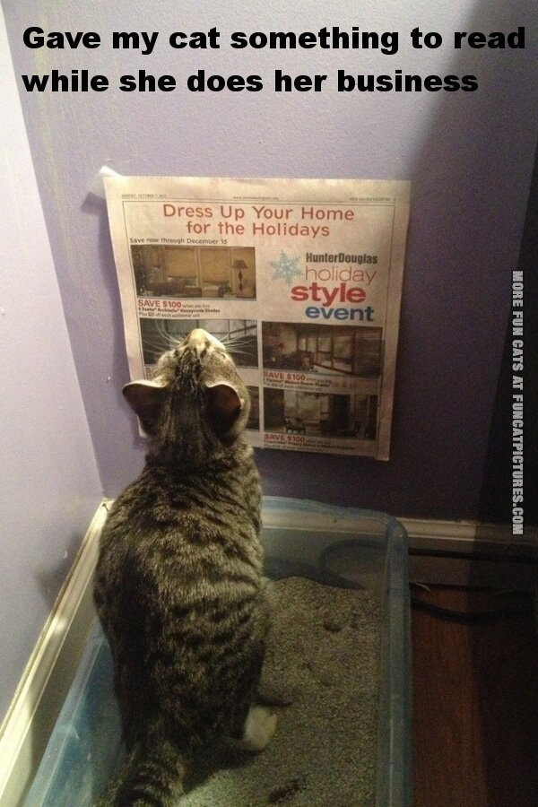 fun cat picture litter box reading