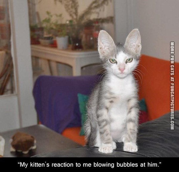 fun-cat-picture-my-kittens-reaction'
