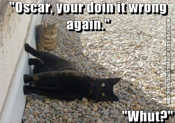 fun-cat-picture-oscar-youre-doing-it-wrong-again