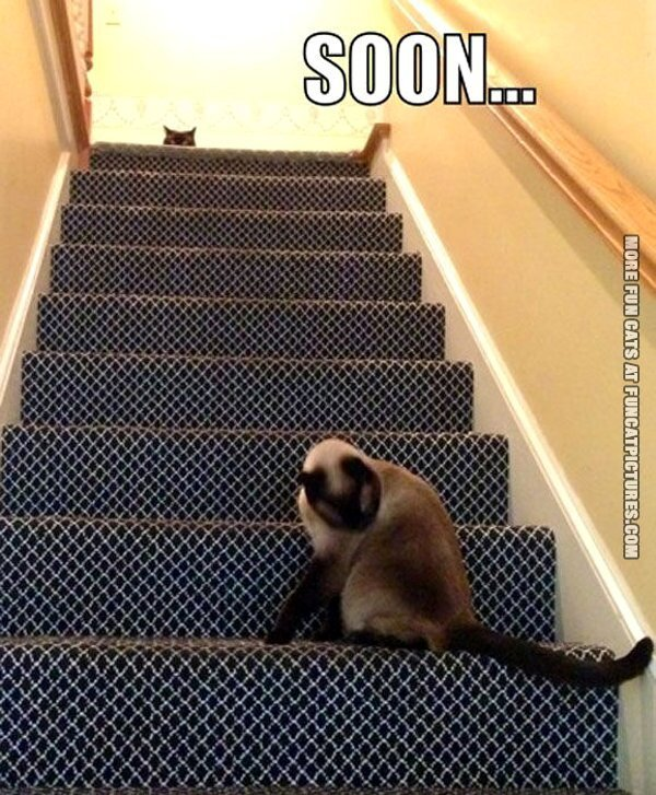 fun cat picture soon stairs